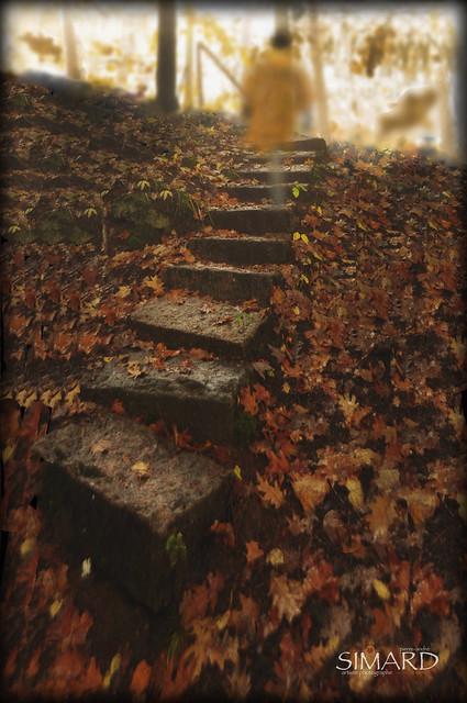 l'Escalier Mystérieux...