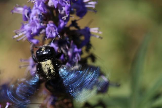 Spanish Bees