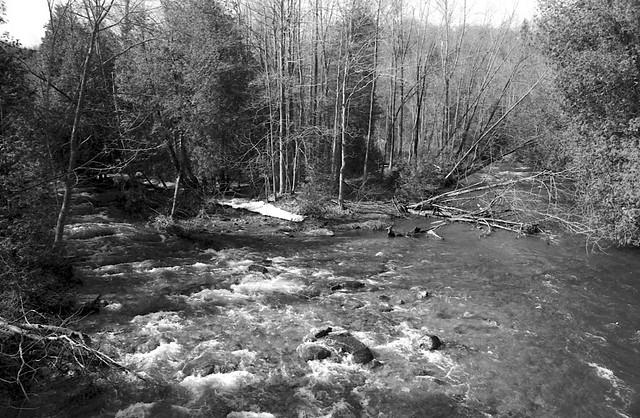 Forks of the Credit River