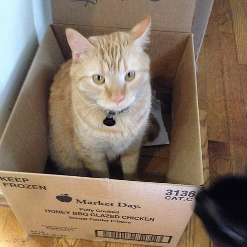 Box Enters House. Box Gets Occupied. #cats #catsofinstagram #foodcatspens