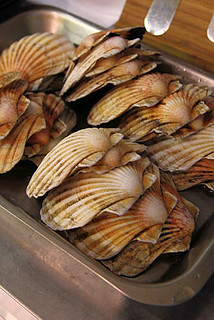 Scallop shells IMG_0999 R