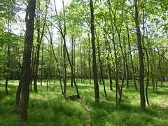 Wald in der Nähe der Glashütter Wiesen