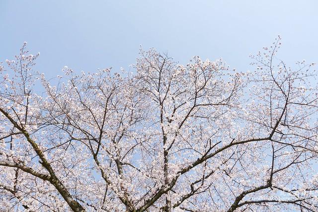 0331D6姬路、神戶_92
