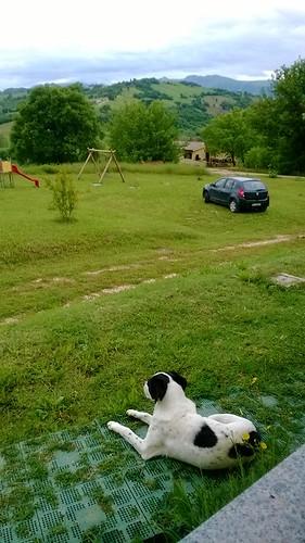 Lupino fa la guardia al nostro alloggio