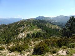 Sentier de la crête Vaccia - Cavalletti : la crête derrière nous dans la montée