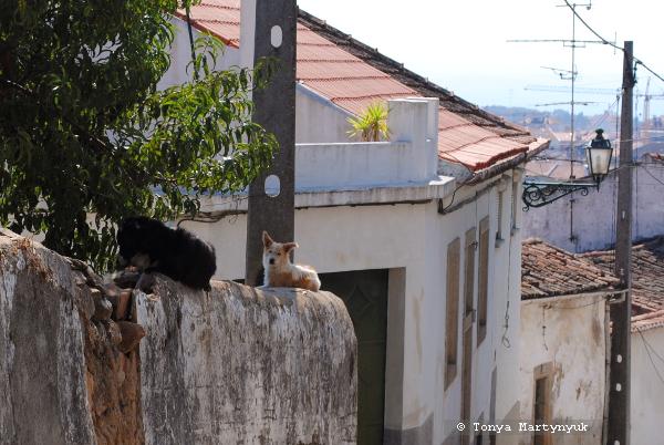 48 - Castelo Branco Portugal - Каштелу Бранку Португалия
