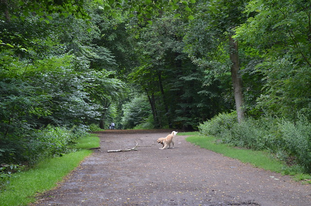 Grunewald Berlin_ determined dog with tree branch