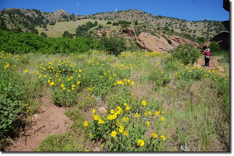 Red Rocks Trail 6