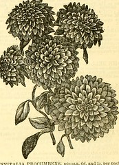 "Image from page 267 of ""The Gardeners' chronicle and agricultural gazette"" (1844)"