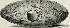 """Image from page 222 of """"The ancient stone implements, weapons, and ornaments, of Great Britain"""" (1872)"""