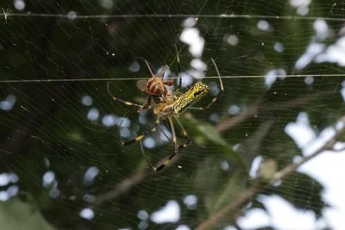 꿀벌과 거미 Honeybee & Spider