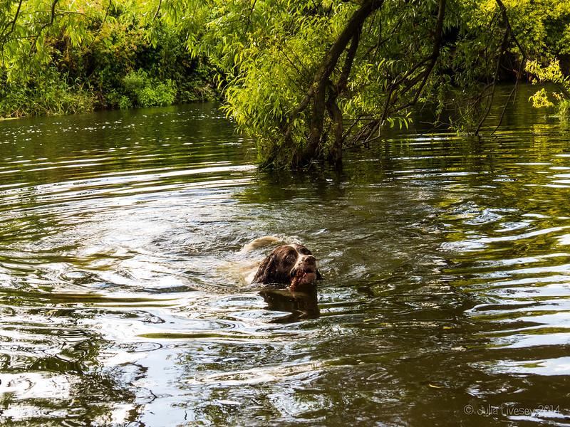 A swim on his birthday