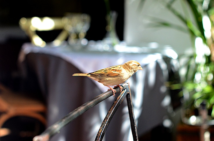 DSC_2706 Bird at La Brasa Ibiza