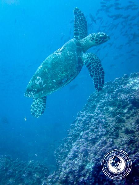 Sea Turtle_.jpg