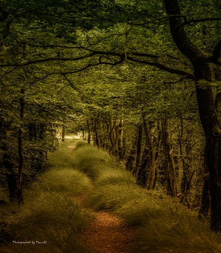 Duvenstedter Brook - Rundweg 4