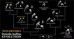Xenarthra Phylogeny The World's...