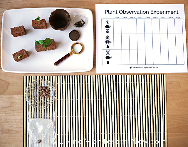 Plant Life Stages and Observation Activities