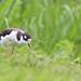 2014-07-19 - Sylvan Waterfowl Park - -147-Edit.jpg