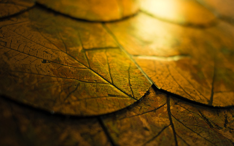 Glden leaves