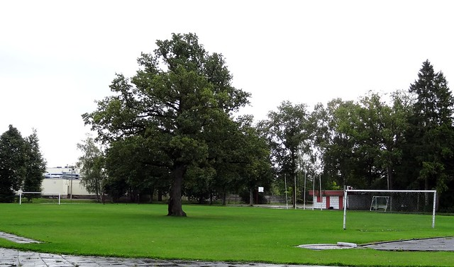 Saaremaa Island: football ground with tree on the pitch...