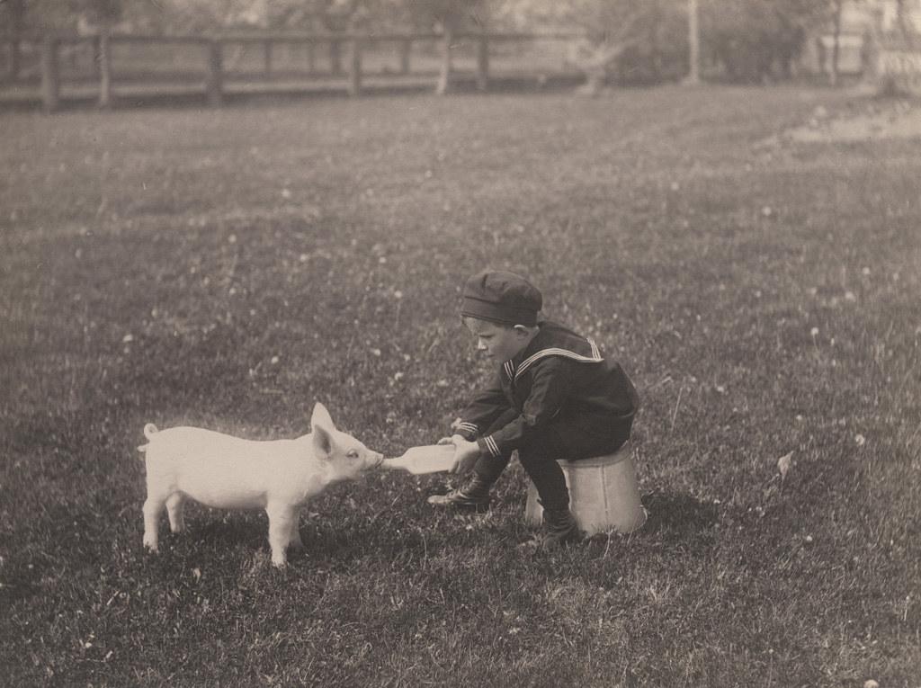 Little boy bottle feeding piglet, 1920