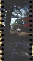 campsite232