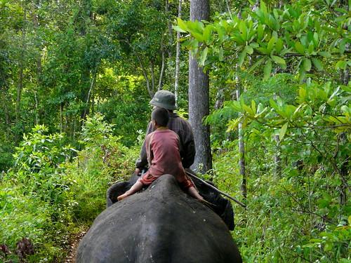 travel forest asia cambodia taxi panasonic riding michel elefant tuk dmc mahut buong dschungle michél mondulkiri pretzsch fz18