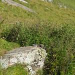 Mi, 03.09.14 - 14:18 - Leukerbad - Lötschenpass - Lämmeren - Les Violettes - Montana