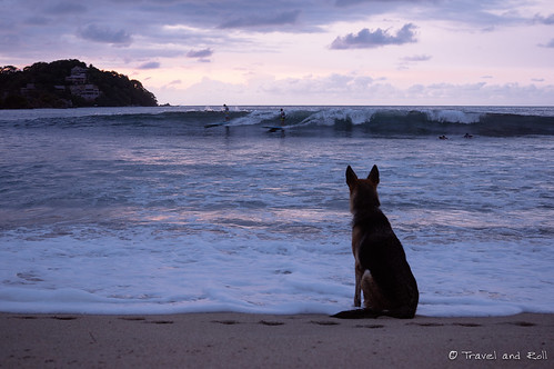 Sayulita dog waiting for his master surfing
