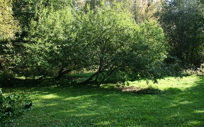 Omenapuilla1