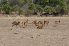 malawi 139