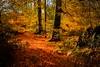 craigie woods by beemer boy
