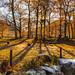 Autumn shades,