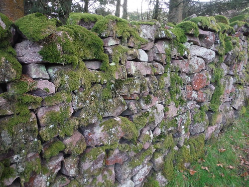Mossy Drystone Wall, along Beacons Way