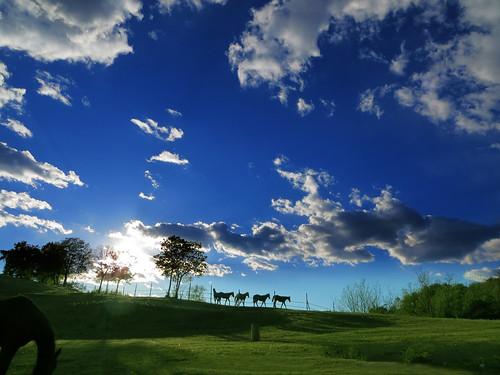 sky horses italy nature clouds landscape countryside italia country hill friuli villalta