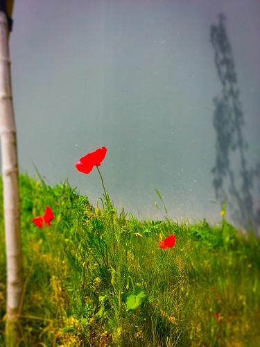 des fleurs dans ma ville
