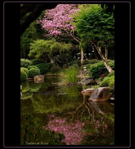 pink trees reflection water japanesegarden pond minolta australia brisbane botanicgarden mtcoottha tabebuiaimpetiginosa mtcootthabotanicgardens mcbgb