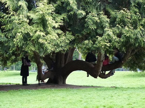 le gros arbre