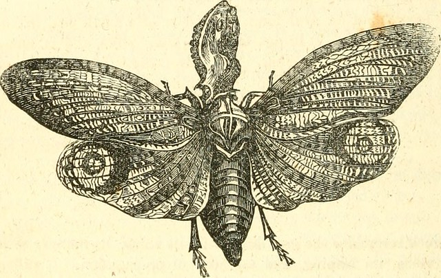 "Image from page 833 of ""A System of natural history : containing scientifci [sic] and popular descriptions of man, quadrupeds, birds, fishes, reptiles and insects"" (1834)"