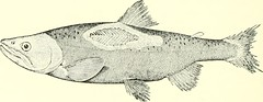 """Image from page 95 of """"Salmon and trout"""" (1904)"""
