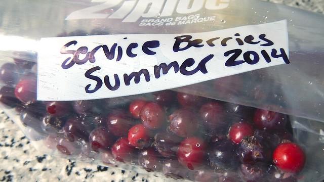 Service Berries 4