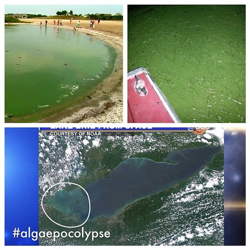 Poor #lakeerie ! As #algaebloom persists in western end, folks in #nwohio brace for up 7 days of bottled water (half-life of #microcyten #toxin produced by algae) #ohio #algaepocolypse #tekkbabe859 #blondebetweenthemountains