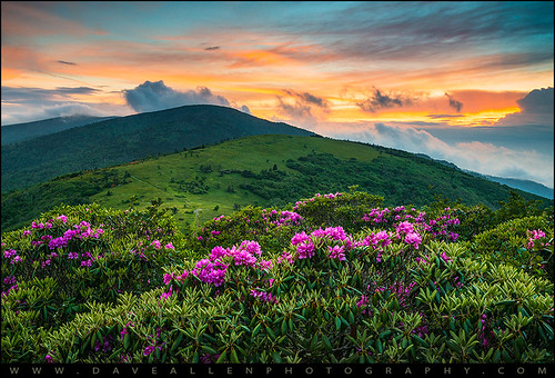 flowers sunset nc nikon tn hiking tennessee northcarolina rhododendron appalachia blueridgemountains appalachiantrail daveallen d800 fstop reallyrightstuff rrs landscapephotography singhray southernappalachians outdoorphotographer fstoploka hikingnorthcarolina