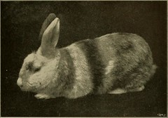 """Image from page 288 of """"Our domestic animals, their habits, intelligence and usefulness;"""" (1907)"""