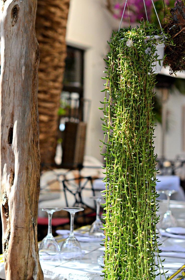 DSC_2681 Ibiza, La Brasa plants
