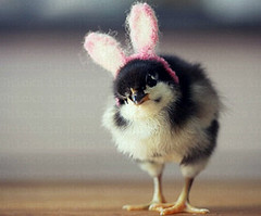 Top-10-Baby-Chicks-in-Hats-3