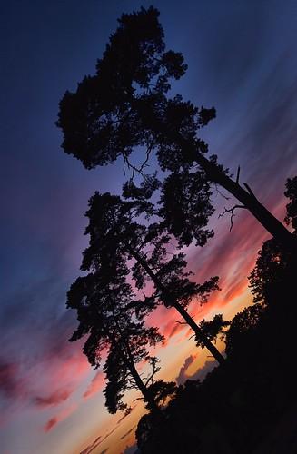trees sunset silhouette pentax devon shobrooke k20d sigma816mm