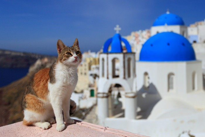 Cute-cat-in-Santorini-Greece-1