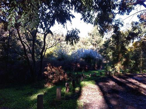 Hoffman's Mill: Spot the Kookaburra