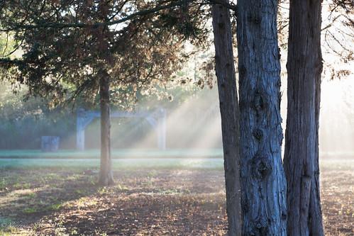 mist sunrise illinois preserves sunbeams lakecounty halfdayforestpreserve